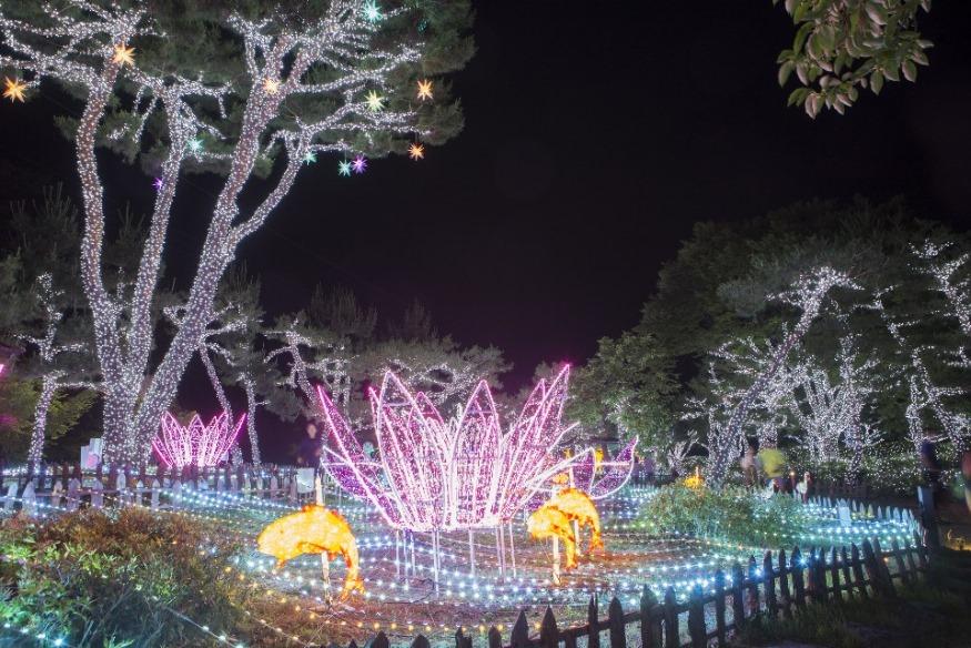 1. 궁남지 야간경관 장면 (3).JPG