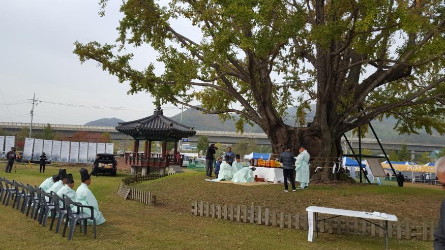 [크기변환]1104 추부-요광리 은행나무 축제.jpg
